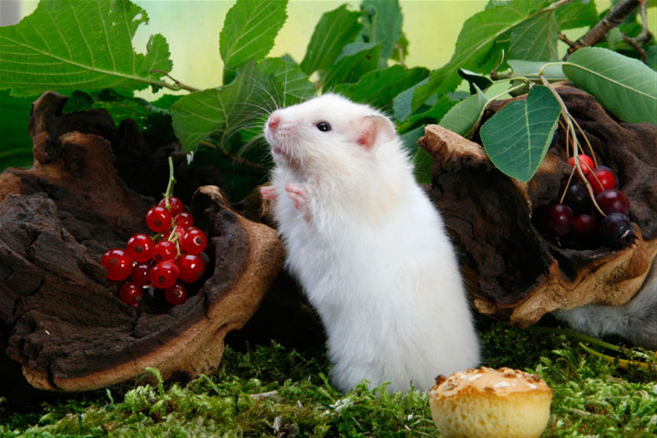 984年属鼠人2021年事业运势