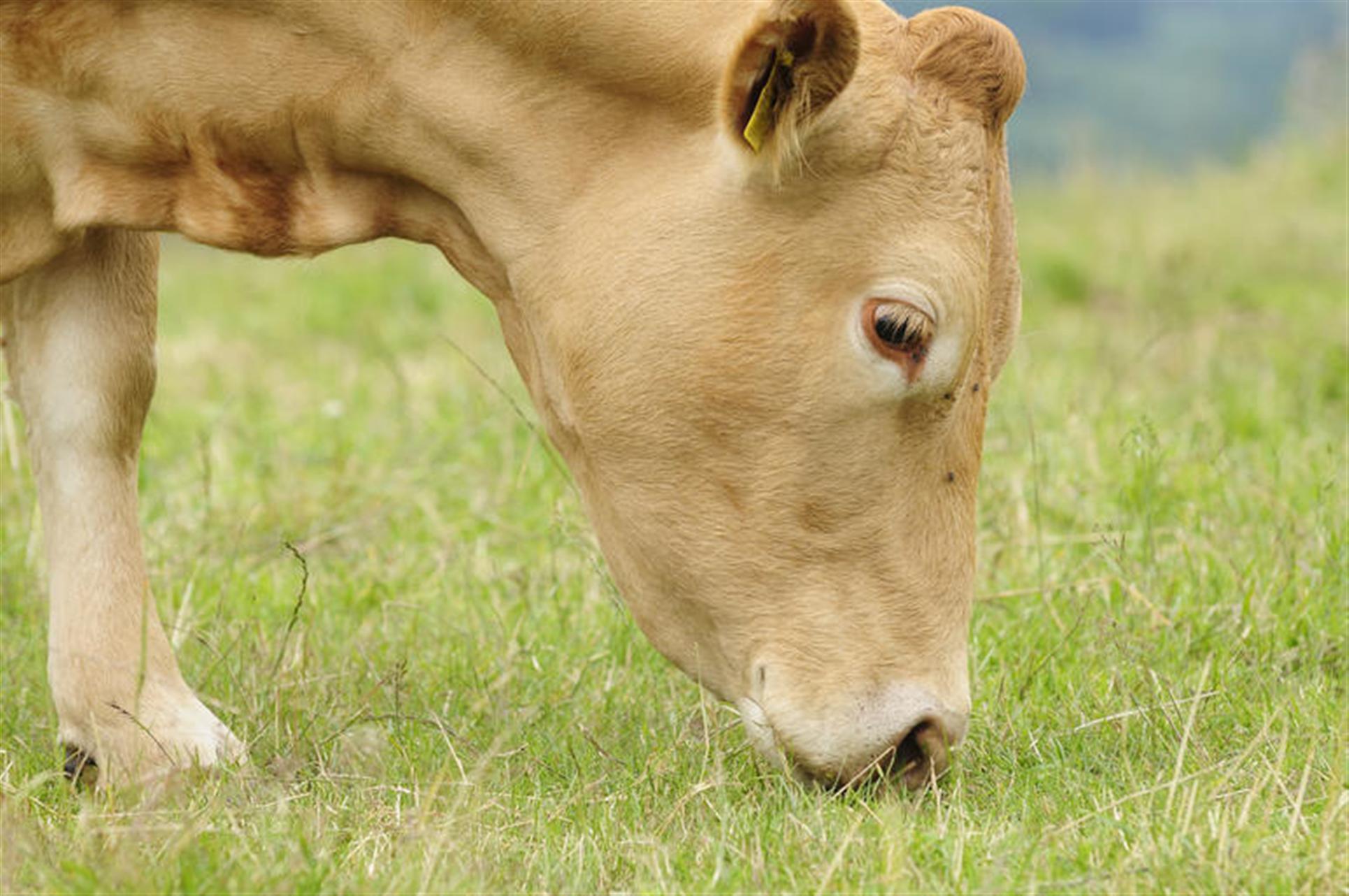 属牛找对象找多大的好1997年属牛女一生命运