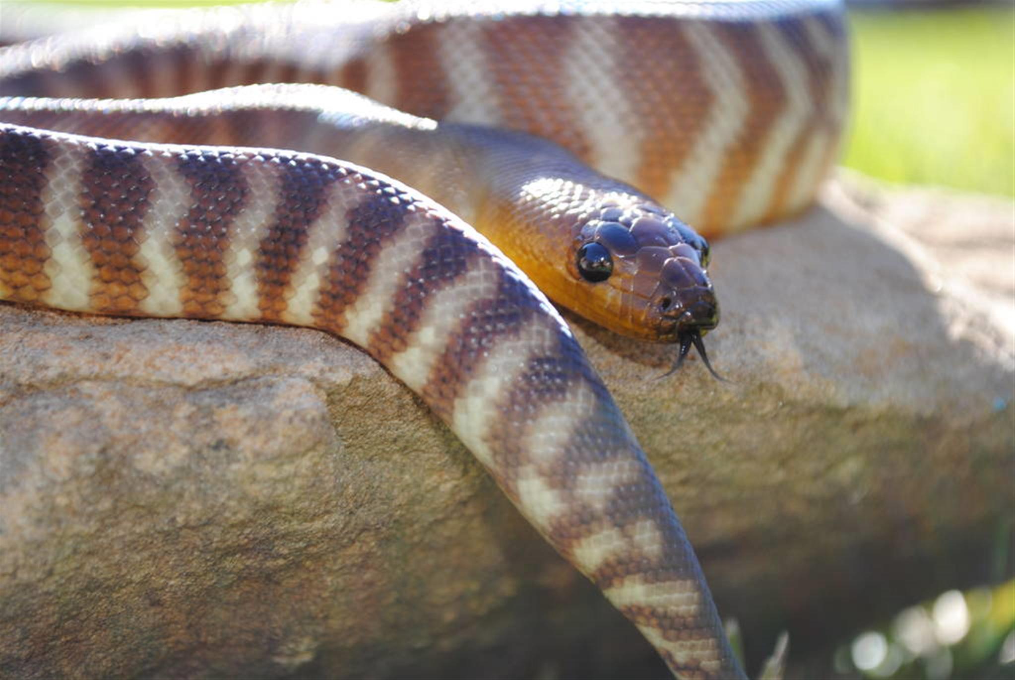 福气之蛇几月的好 五行福气之蛇命运特点
