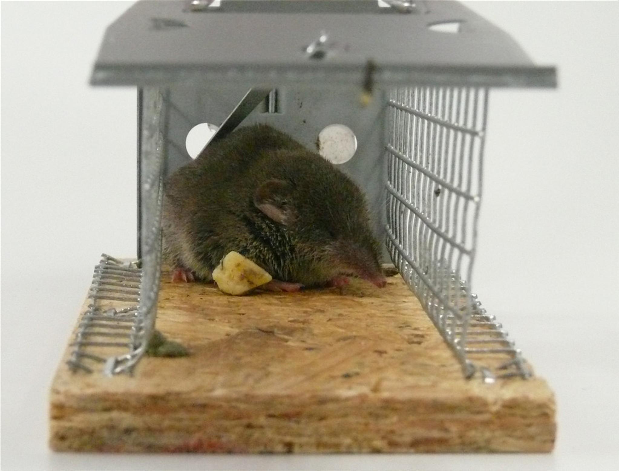 属鼠人做哪种生意最旺 属鼠人如何旺财运